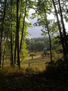 September Pastorale
