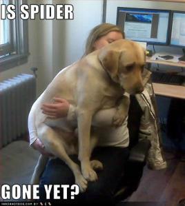 SpiderGone