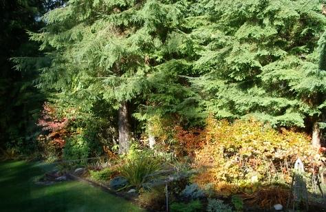 Morning Garden