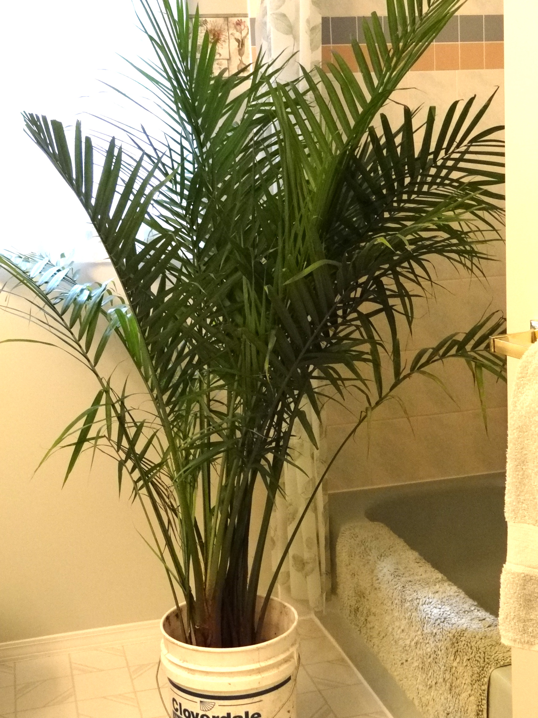 Palm Tree Bathroom Decor Ideas Bathroomist: There's A Palm Tree In My Bathroom!