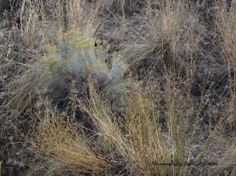 Grasses 2