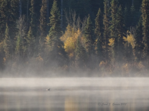 Mist on our lake in BC's Cariboo