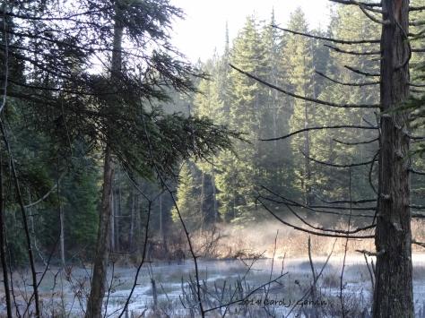 Wildwood-3
