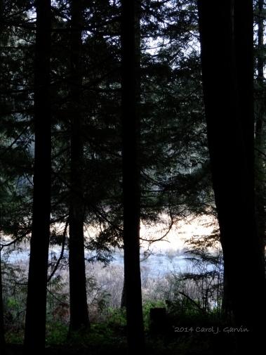 Wildwood-5