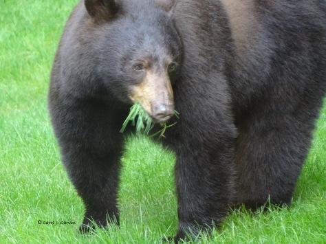 9-BearGrass