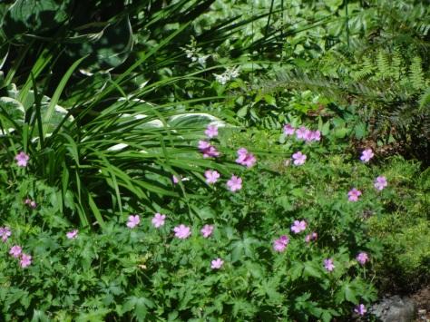 Messy Garden-1