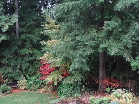 Fall Backyard