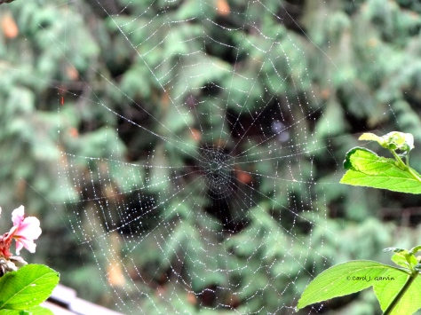 Rained on Web