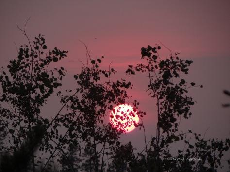 1-Sun