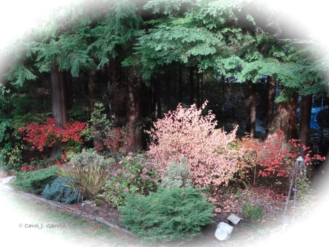 Fall Garden