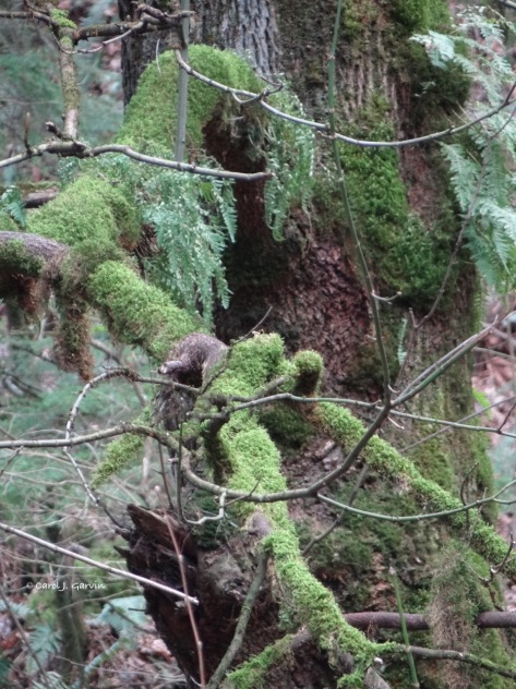 Spring moss and ferns2
