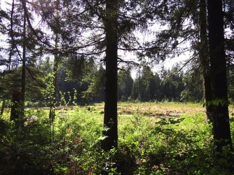 Wildwood-1